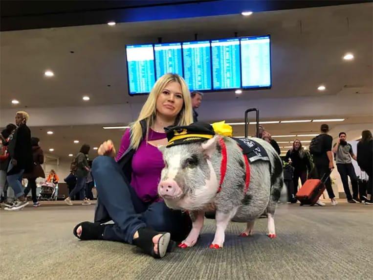 Lilou el Cerdo alivia a los pasajeros estresados en el aeropuerto de San Francisco
